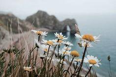 Imagen de flowers, beach, and nature