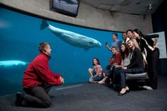7 Must-See & Do Things in Vancouver: Vancouver Aquarium | 29secrets