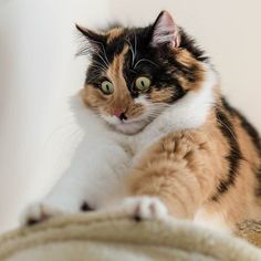 It may look like your cat is kneading dough to make delicious bread or cookies, but the kitty habit is not simply for fun.