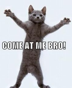 Animal COME AT ME BRO memes! #3 is hilarious