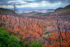 Day 294  The view in the La Sal mountains near Moab Utah