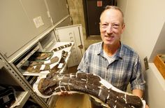 Scientists from around the world are marvelling over a staggering deposit of dinosaur bones in Edmonton that is being likened to a jigsaw puzzle from the Cretaceous period. Discovered in the 1980s and excavated painstakingly by researchers over the last eight summers, the massive bone bed on the southern edge of the city includes the fossilized remains of dozens of different types of dinosaurs that were likely travelling together when they died more than 70 million years ago.