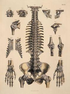 Skeleton parts