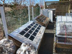 Niki Jabbour - The Year Round Veggie Gardener: I'm back.. with wonderful winter garden photos to share!