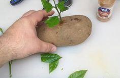 Mies poraa reiän perunaan ja tökkää siihen oksan — tässä niksi, jota haluat kokeilla Potatoes, Vegetables, Food, Youtube, Potato, Essen, Vegetable Recipes, Meals, Yemek