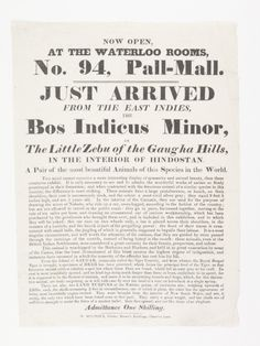 Handbill or flyer announcing the display of the 'Bos Indicus Minor or the Little Zebu of the Gaugha Hills' at the Waterloo Rooms, 94 Pall-Mall. The animal, a type of domestic cattle originating from South Asia, was to be displayed along with a specimen of deer from the Island of Saugar and two land turpins from New South Wales.