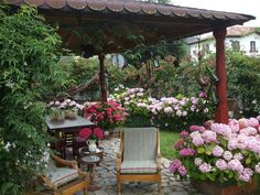 Google plantas y jard n and ideas on pinterest for Jardines con hortensias