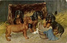 Vintage Dachshund, Dachshund Art, Pug Art, Dachshund Puppies, Dachshunds, Wiener Dogs, Antique Art, Vintage Art, Fluffy Animals