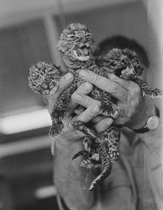 Hand full o' kitty.