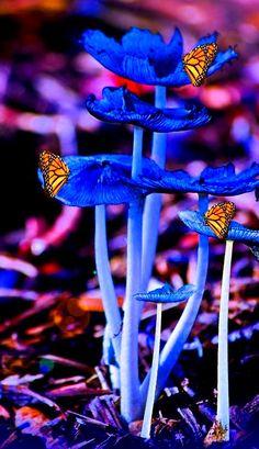 Una de las mejores técnicas para relajar es mirar los colores que nos ofrece la naturaleza...