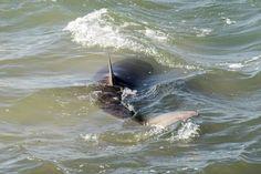 https://br.noticias.yahoo.com/tubarão-devora-cadela-praia-austrália-145504148.html