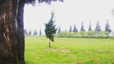So excited when i saw this #tree #trees #mount #mountains #landscape #naturerepublic #nature #whpstripes #instagramhub @instagram @natgeo @nature