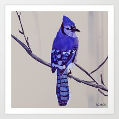 Blue Jay Bird Art Print Art Prints - Gallery quality Giclée print on natural white, matte, ultra smooth, cotton rag, acid and lignin free archival paper using Epson archival inks. Custom trimmed with border for framing. Blue Bird Art, Blue Jay Bird, Doodle, Bird Canvas, Canvas Canvas, Fine Art Prints, Canvas Prints, Bird Artwork, Ancient Art
