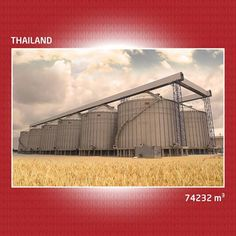 Mysilo في كل مكان! افتتح تايلاند مصنع عملاق مع شركائنا في الخدمة نقوم بتخزين الحبوب دا في العالم!