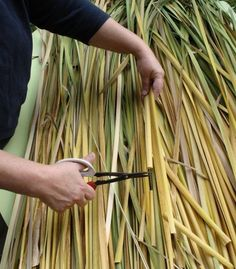 How To Process Cattail Leaves For Weaving Projects | Eco Snippets