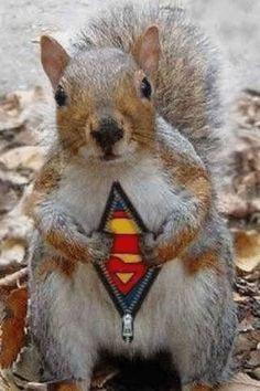 superman is back !