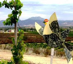Tre Galline (Three Chickens) restaurant in Mexico's wine country