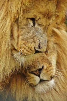Lionly love   www.liberatingdivineconsciousness.com