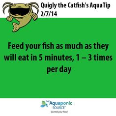 #aquaponics #aquaculture #fish #feeding  TheAquaponicSource.com #hydroponicgardening
