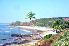 The Chapora beach situated at around 10 kms from #Mapusa in #NorthGoa is one of the most interesting beaches of Goa. The picturesque beach with white sand and a number of coconut palms along its stretch. The clean and tidy Chapora beach has its own charm and is amongst some of the well known places in #Goa. #bestplacestogo #holiday #tourism #ttot