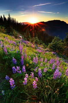 Hurricane Ridge - Olympic National Park by heidi Places To Travel, Places To See, Beautiful World, Beautiful Places, Landscape Photography, Nature Photography, Nature Sauvage, Jolie Photo, To Infinity And Beyond