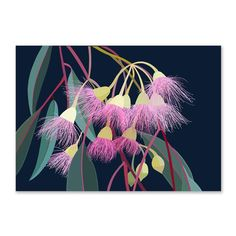 Landscape Flowering Gum Limited Edition Art Print by Australian artist Lamai Anne. Bring the Australian outdoors into your home. Australian Wildflowers, Australian Native Flowers, Australian Artists, Botanical Drawings, Botanical Illustration, Botanical Art, Plant Drawing, Guache, Dark Backgrounds