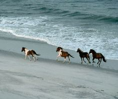 Wild horses still roam on Assateague Island near Virginia -- one of Travel and Leisure's best family getaways