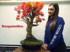 Amazing bonsai trees in custom handmade one of a kind bonsai pots Wonder Art, Bonsai Art, Bougainvillea, Miami, Tropical, Beautiful