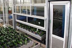 Containers for Nursery Automation Greenhouses, Open Up, Rollers, Pipes, Benches, Manual, Bridge, Container, Nursery
