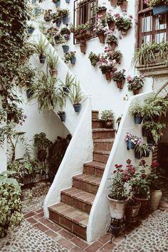 Welcoming plants. #the2bandits #banditabodes #banditplants