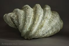 Antiques Atlas - Giant Clam Shell Of Large Proportions