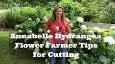 Annabelle Hydrangea Flower Farmer Tips For Cutting