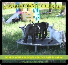 NEW GOAT OWNER CHECK LIST List Of Basic Necessities & Recommended Supplies and Goat Toy Suggestions To Keep Your New Kid Goats Healthy, Safe & Happy