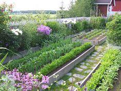 Raised Vegetable Garden Beds Can Be A Great Gardening Option Potager Garden, Veg Garden, Edible Garden, Garden Paths, Vegetable Gardening, Garden Boxes, Gardening Books, Container Gardening, Garden Landscaping