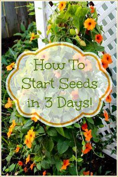 How to Start Garden Seeds in 3 Days