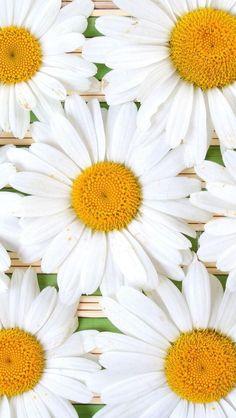 Wallpaper iPhone summer flowers