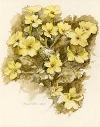 Image result for primrose yellow objects