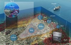 An illustration of what trawlers do the sea floor. They cut through every living thing in their path and destroy century old reefs and habitats. Over fishing is also a problem.