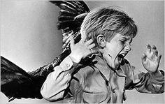 Fear of Birds, Ornithophobia : My Extreme Animal Phobia: Animal Planet