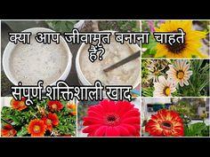 Organic Liquid Fertilizer, Small Garden Design, Terrace Garden, Houseplants, Gardening Tips, Make It Yourself, Youtube, Indoor House Plants, Youtubers