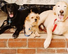 Looking for a Sunland pet sitter? Dominique is pet care, dog care, and cat care tested. Dominique has also completed a background check! #Sunland #California #petsitter #cats #dogs #pets