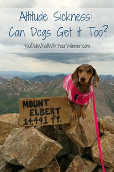 I wondered if our plans of climbing the highest peak in Colorado with my dogs would even be possible