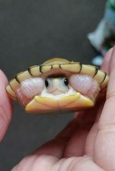 Cute little turtle!