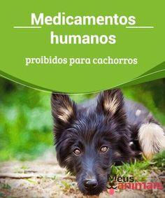 Medicamentos humanos proibidos para cachorros #Medicamentos #humanos #proibidos para #cachorros, Anti-inflamatórios não-esteroides, Paracetamol, remédios para colesterol, Benzodiazepínicos, Antidepressivos. #Saúde