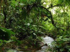 Ein erfolgreiches Jahr für Regenwald-Schutz - LichtBlickBlog