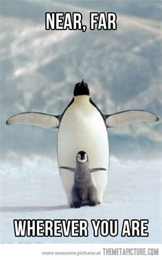 Penguin Titanic…this shouldn't be as funny as I think it is