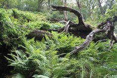 Wicklow National Park, Glendalough