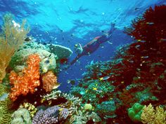 See the incredible sea life along the Great Barrier Reef off the coast of Queensland.