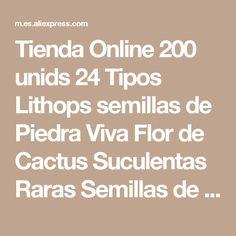 Tienda Online 200 unids 24 Tipos Lithops semillas de Piedra Viva Flor de Cactus Suculentas Raras Semillas de Cactus Planta Carnosa Bonsai Colorido Fácil Crecer jardín | Aliexpress móvil