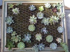 Tutorial on creating a picture framed succulent piece.